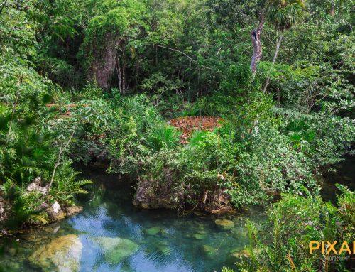 A true Heaven on earth cenote wedding
